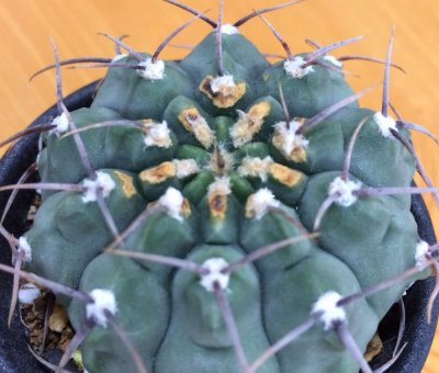 succulent-plants-sick-01