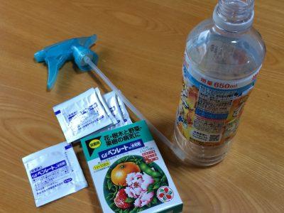 多肉植物用の殺菌剤「ベンレート水和剤」