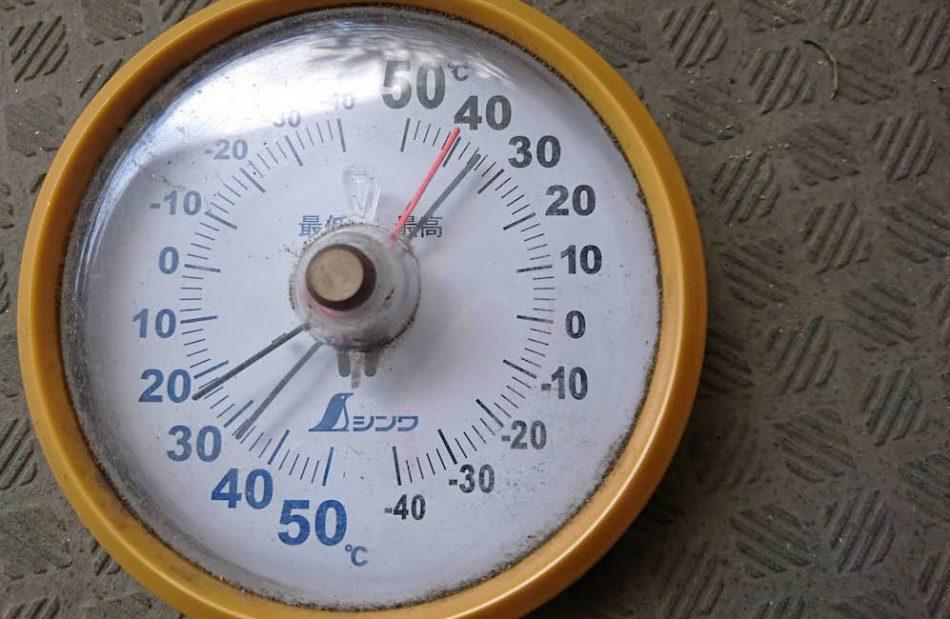アガベの育て方、温度について