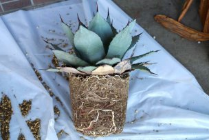 plant-roots-vol2-02