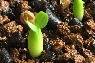 plant-seedlings-00
