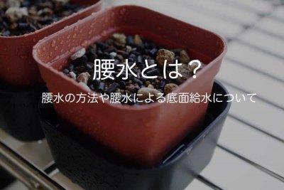 koshimizu-00
