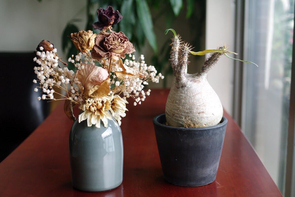succulent-winter-flower-01