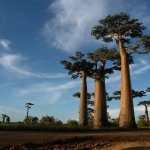 魅惑的なマダガスカルの植物を紹介