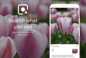 google-lens-plants-00