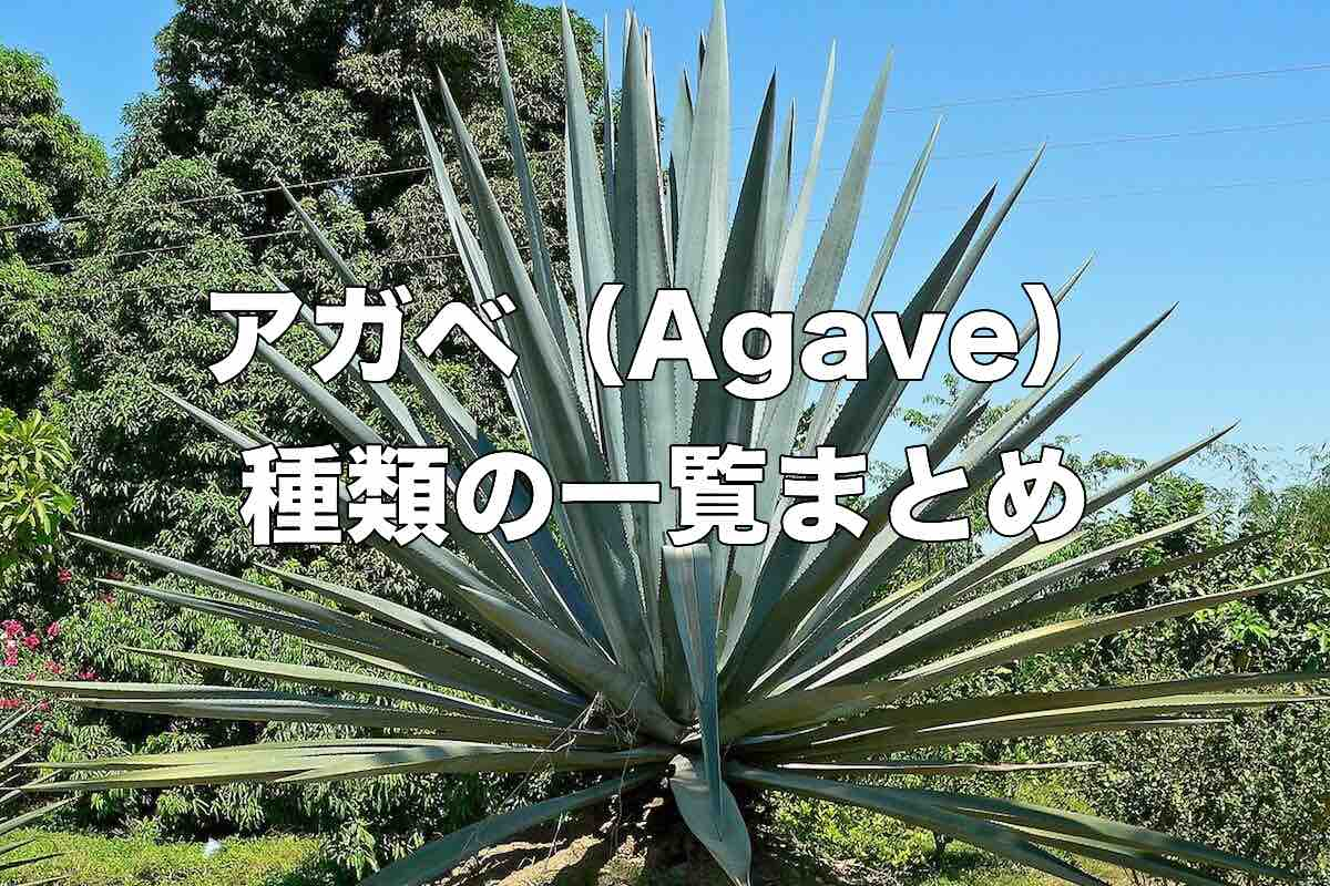 agave-list