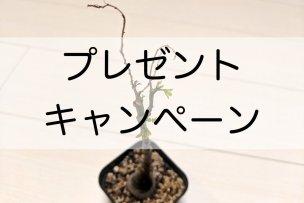 present-campaign-no2-03