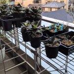 無印良品のステンレスユニットシェルフを室外ガーデンラックとして利用