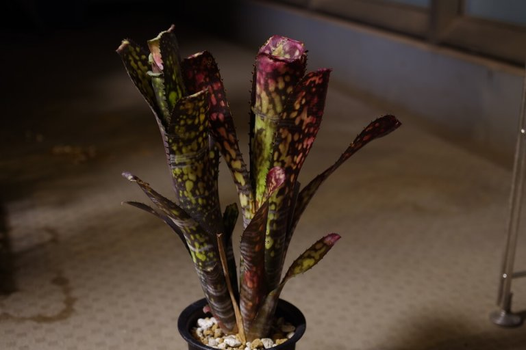 night-photo-plants-04