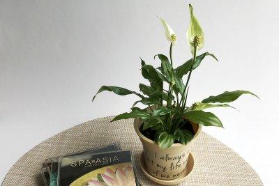 spathiphyllum-01