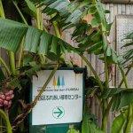 渋谷区ふれあい植物センターに行ってきました!(企画展:食虫植物大集合)