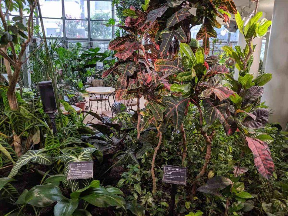 渋谷区ふれあい植物センターの温室