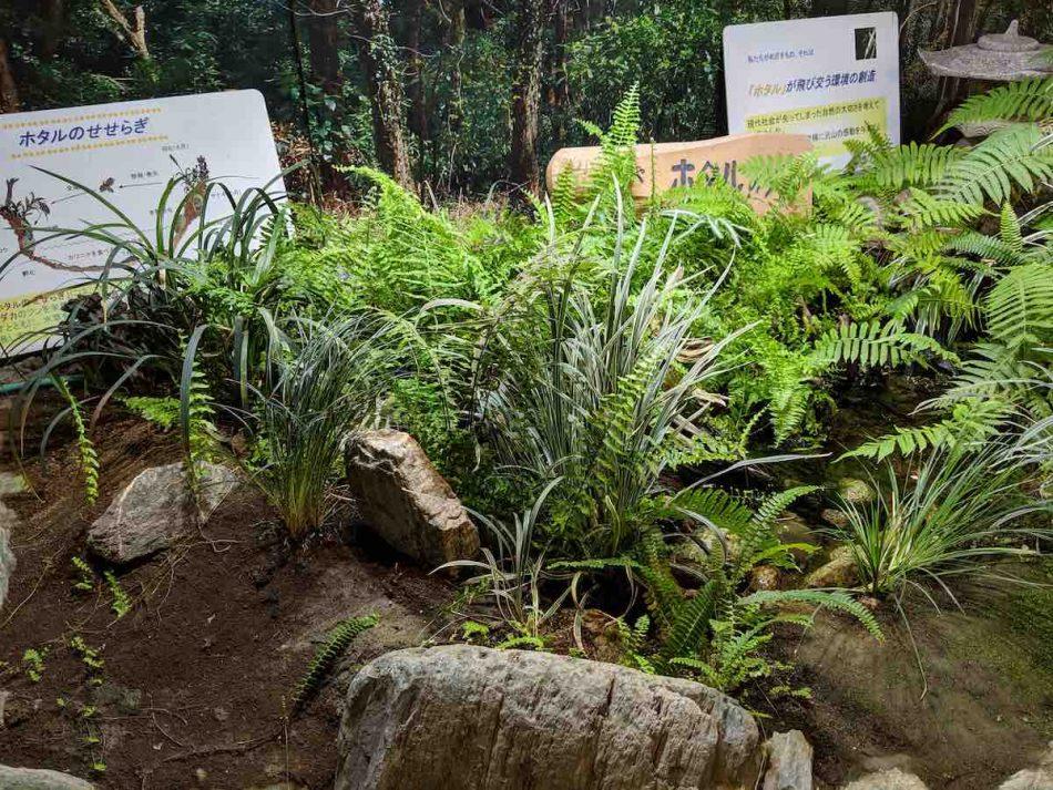 渋谷区ふれあい植物センターの水辺