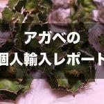 【アガベの個人輸入】アガベをPlant