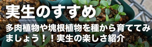 多肉植物・塊根植物の実生のすすめ