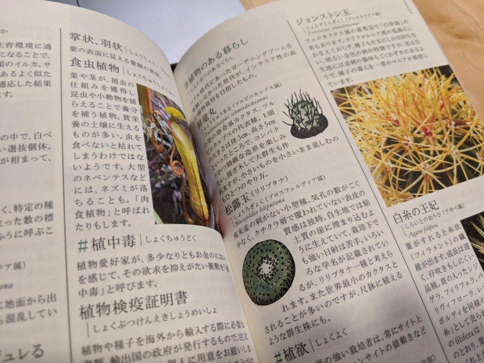 多肉植物サボテン語辞典 P88/P89より