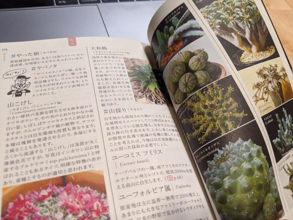 多肉植物サボテン語辞典 P174/P175より