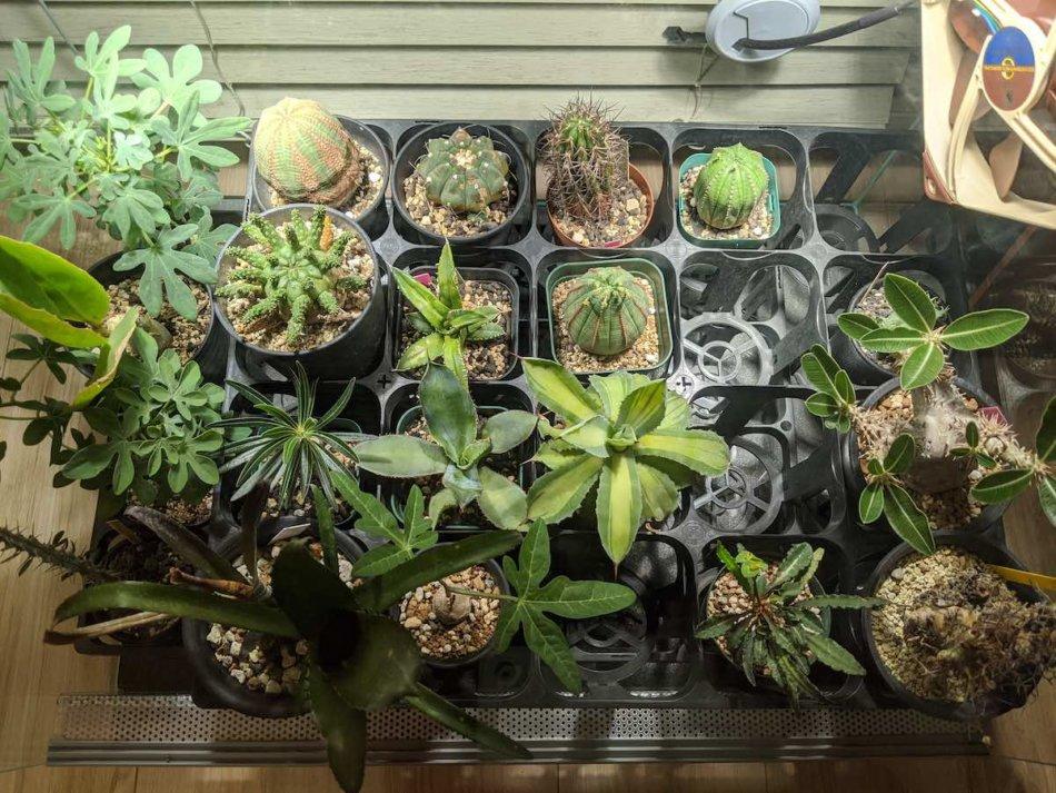 2020年8月30日に撮影した多肉植物室内LED栽培の水槽
