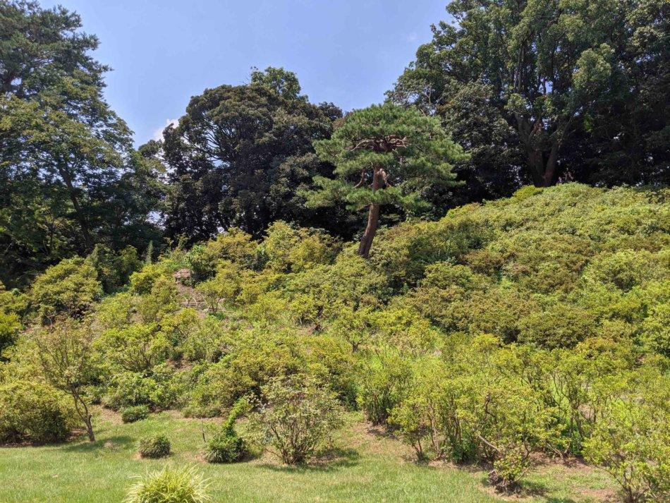 六義園:藤代峠を登山
