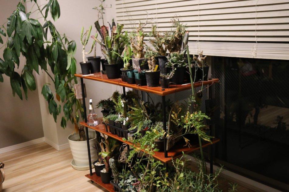 Quadraspire QAVMの3段利用で徐々に植物が増えてきました
