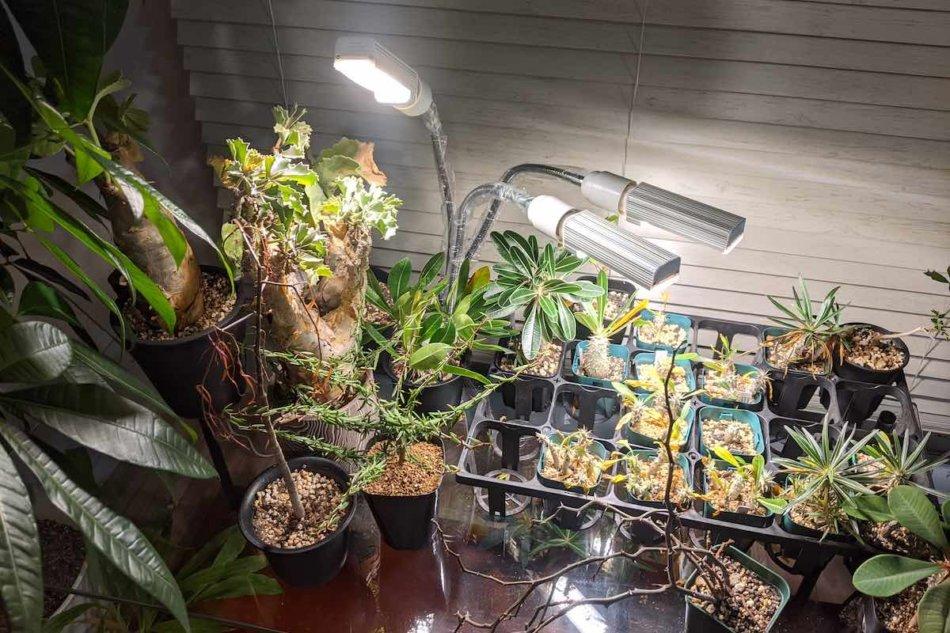 2020年11月7日に撮影、まだごく一部の寒さに弱い植物のみ取り込んだラックで植物育成LEDライトを利用してみた