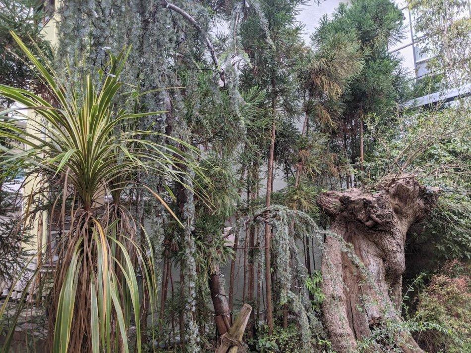 入り口付近の植栽と、スペインから運ばれてきた樹齢500年のオリーブの木