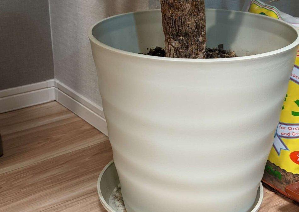 室内で育てている観葉植物、フレグラーポット30型を使用