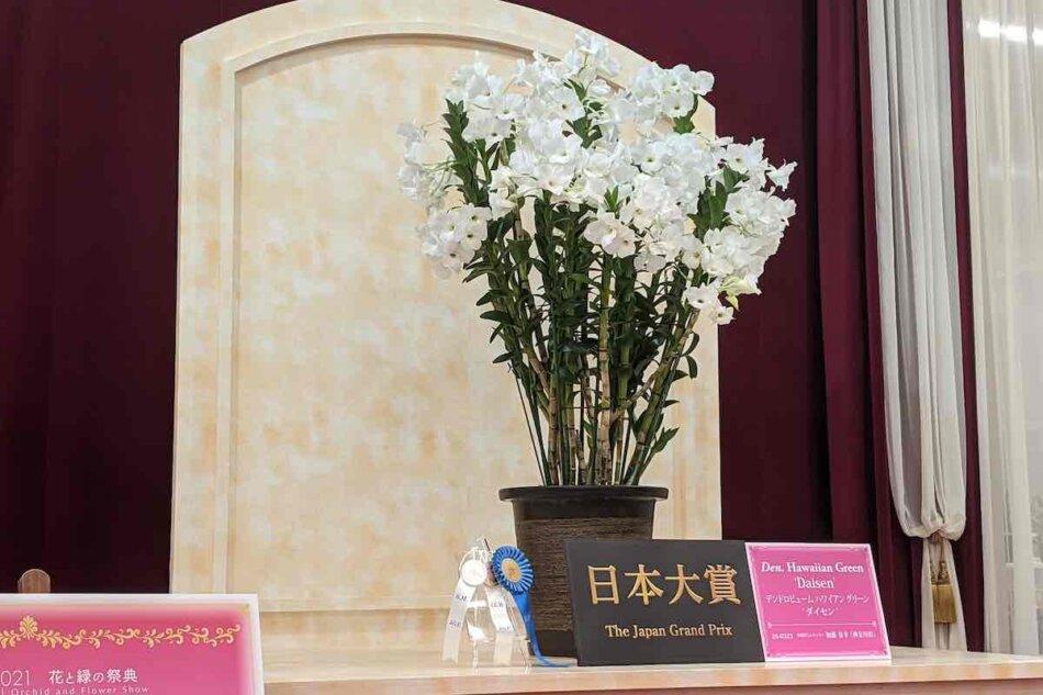 世界のらん展2021、日本大賞
