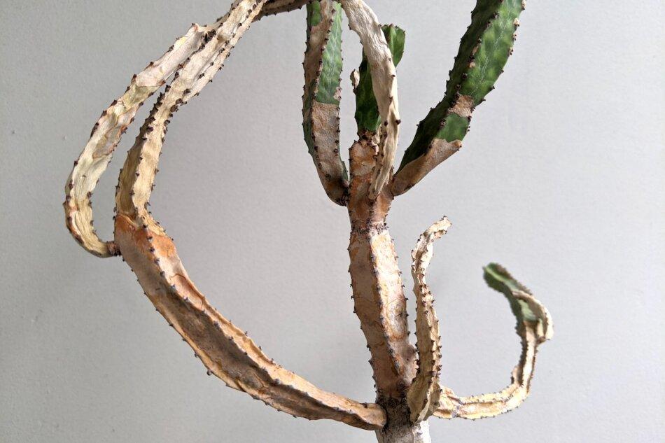 2021年6月13日に撮影したユーフォルビア・リットニアーナ(Euphorbia pseudocactus ver. 'lyttoniana')2枚目
