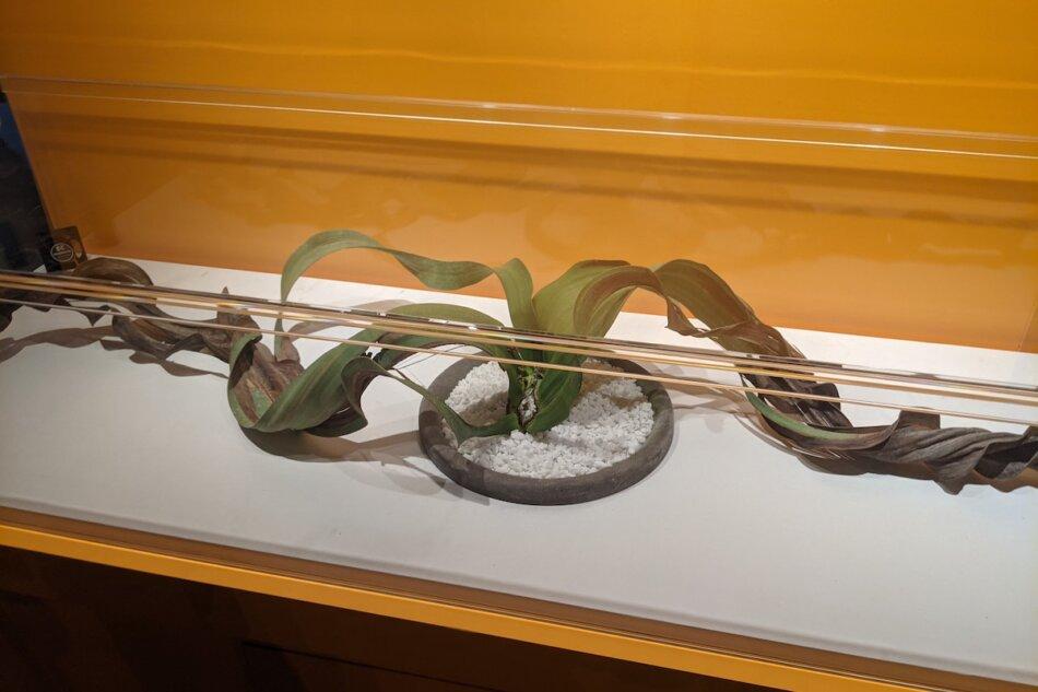 特別展「植物 地球を支える仲間たち」奇想天外