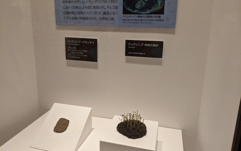 特別展「植物 地球を支える仲間たち」世界初公開のクックソニアの化石と模型だそうです